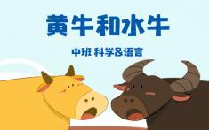 中班-黄牛和水牛